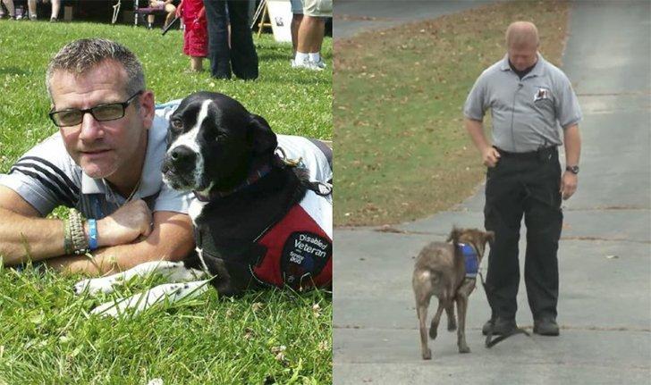 Rescue Dog Ruining Life